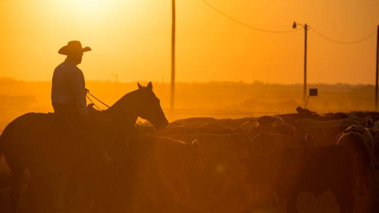 Pen rider at dusk